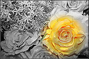 Black And White Photos Originals - Yellow Rose on Black and White by Dora Sofia Caputo