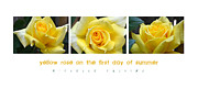 Rose Petals Digital Art Prints - Yellow Rose on the First Day of Summer Print by Michelle Calkins