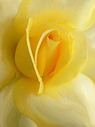 Rose Macro Prints - Yellow Rose Portrait Print by Jennie Marie Schell