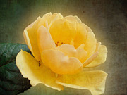 Snezana Petrovic - Yellow rose