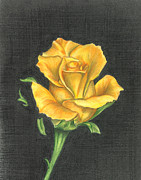 Troy Levesque - Yellow Rose