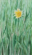 Aster  Painting Framed Prints - Yellow Salsify Framed Print by Shirley Miller