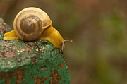 Scott Lenhart - Yellow Snail In The ...