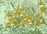 Plants From My Garden - Yellow Stargazers on Soft Green by Tom Wurl