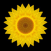 Yellow Sunflower Ix Flower Mandala Print by David J Bookbinder