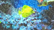 Blue And Purple Sea Posters - Yellow Tang Of Hawaii Poster by Rosemarie E Seppala