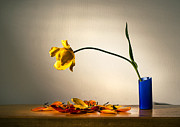 Colored Background Originals - Yellow Tulip 2 by Ivan Vukelic