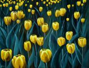 Amsterdam Digital Art - Yellow Tulip Field by Anastasiya Malakhova