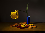 Colored Background Originals - Yellow Tulip by Ivan Vukelic