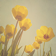 Pastel Digital Art - Yellow tulips by Diana Kraleva