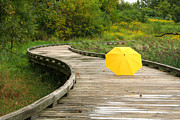 Sarah Yost - Yellow Umbrella after...