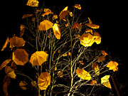 Installation Art Prints - Yellow Umbrellas on Tree Print by Victor Zambrano