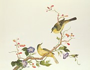 Bird On Tree Painting Prints - Yellow Wagtail with Blue Head Print by Chinese School