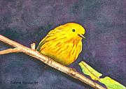 Warbler Paintings - Yellow Warbler II by Sharon Farber