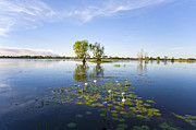 Water Lilies Photo Posters - Yellow Water Billabong Kakadu Australia Poster by Colin and Linda McKie
