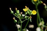 Yellow Wildflowers Print by Theresa Willingham