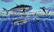 Black Marlin Framed Prints - Yellowfin bust Off0083 Framed Print by Carey Chen