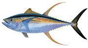 Cobia Posters - Yellowfin Tuna Poster by Carey Chen