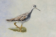 Coastal Birds Metal Prints - Yellowlegs Metal Print by Bill  Wakeley