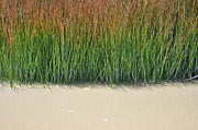 Green - Yellowstone Autumn Grasses Near Hot Pool by Bruce Gourley
