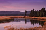Yellowstone Metal Prints - Yellowstone Evening Metal Print by Andrew Soundarajan