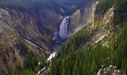 Jerry Cahill - Yellowstone Falls