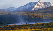Bruce Colin - Yellowstone Morning