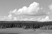 Yellowstone Park Prints - Yellowstone National Park Scenic View Black and White Print by Jennie Marie Schell