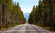Blacktop Prints - Yellowstone Open Road Print by Adam Pender