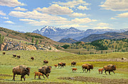 Yellowstone Spring Print by Paul Krapf