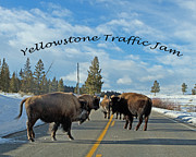 Lloyd Alexander-Pictures for a Cause - Yellowstone Traffic Jam
