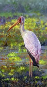Wolf Painting Posters - Yelow-Billed Stork Poster by David Stribbling