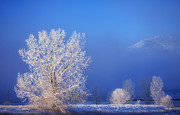 Ice Trees Prints - Yesterdays Blues Print by Darren  White