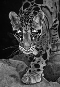 Photo Realism Drawings Metal Prints - Yim - The Clouded Leopard Metal Print by Sheryl Unwin