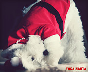 Maltese Dog Posters - Yoga Santa Poster by Melanie Lankford Photography