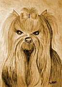 Sepia Drawings Prints - Yorkie 1a Print by Maria Urso