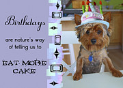 Cute Puppy Pictures Photos - Yorkie Birthday Party by Lori Malibuitalian