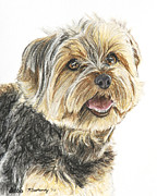 Breed Pastels Framed Prints - Yorkie in Color Framed Print by Kate Sumners