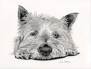 Toy Animals Drawings Prints - Yorkie- Little Dog Print by Sarah Batalka