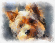Yorkshire Terrier Digital Art - Yorkie Love by Barbara R MacPhail