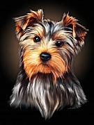 Yorkshire Terrier Digital Art - Yorkie Portrait by Spano by Michael Spano