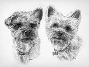 Yorkie Drawings - Yorkie Portrait by Diane Bay