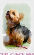 Yorkshire Terrier Digital Art - Yorkie Poster by Betsy Cotton