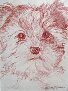 Yorkshire Drawings - Yorkie Pup Sketch by Melinda Saminski