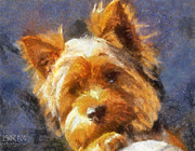 Dog Prints Digital Art - Yorkie Sweetie by Barbara R MacPhail