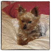 Dog Lying Down Prints - Yorkiehood Print by Betty LaRue