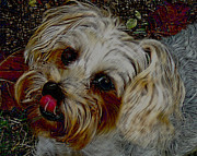 Yorkshire Terrier Artwork Print by Lesa Fine