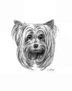 Yorkshire Drawings - Yorkshire Terrier by Lou Ortiz