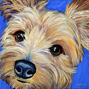 Yorkshire Terrier Metal Prints - Yorkshire Terrier Metal Print by Melissa Smith