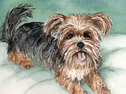 Dog Watercolor Framed Prints - Yorkshire Terrier on bed Framed Print by Cherilynn Wood